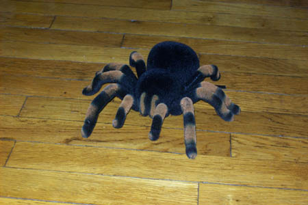 Animal Planet Remote Control Tarantula - I loved this!